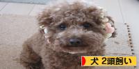 ブログ村 犬2頭飼いへ