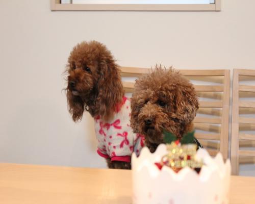 ケーキ ふーてん