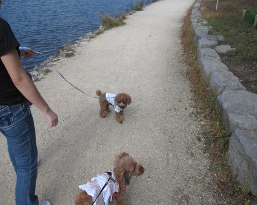 お散歩 湖