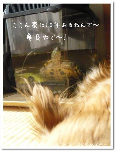 2009-07-26-02.jpg