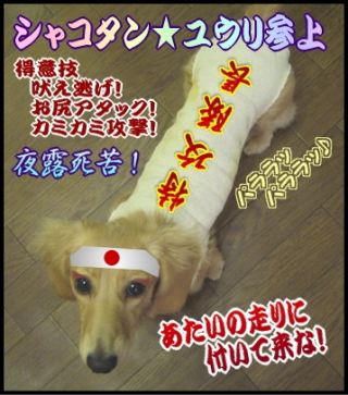 yuri_shako_4_6.jpg