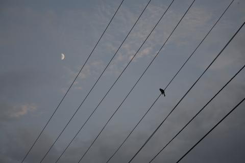 linebirdmoon.jpg
