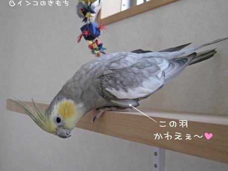 かわいい羽