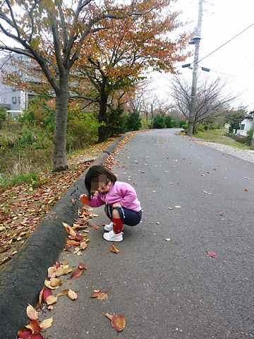 秋の風景 落ち葉ひろい