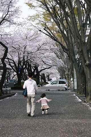 パパとcoco 桜並木