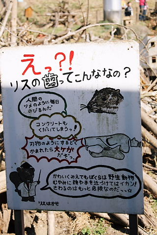 リスの歯の説明