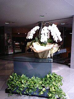 ローヤル胡蝶蘭2