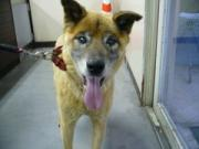 090622 迷子の犬