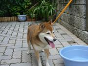 090713_迷子♂(広島市動物管理センター)