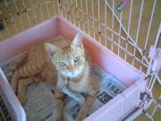 090813 美猫マミー