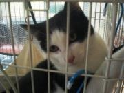 黒白猫1.12