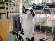 黒白猫1.11