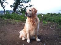2010-6-25 001 (8)ジュティー