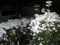 雪090124