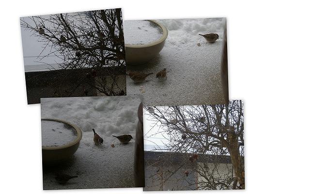 090115庭の雪景色