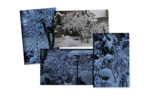 090126庭の雪景色