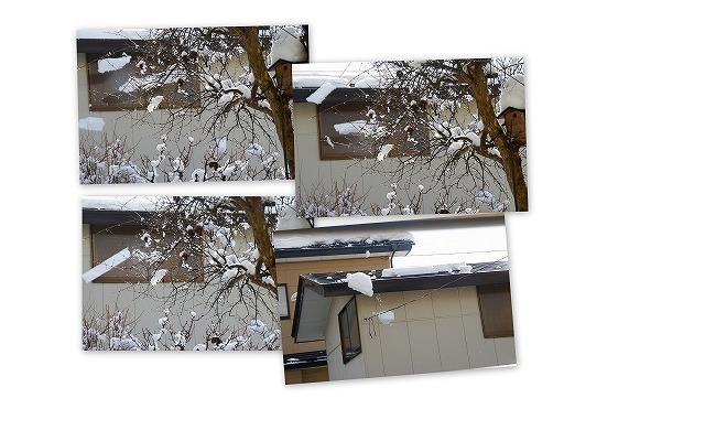 090126庭の雪景色1