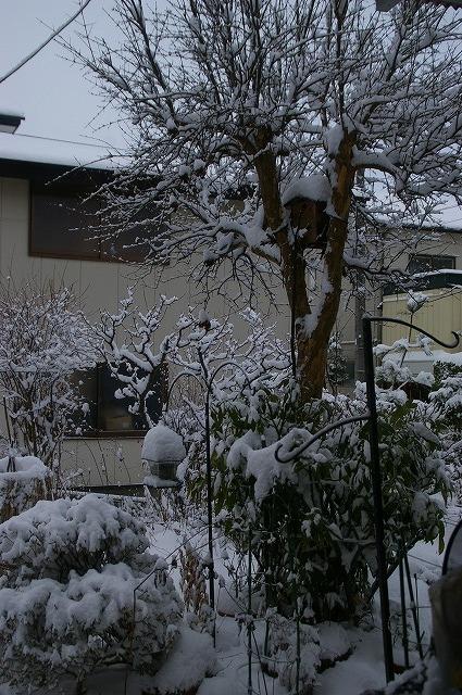 庭の雪景色1