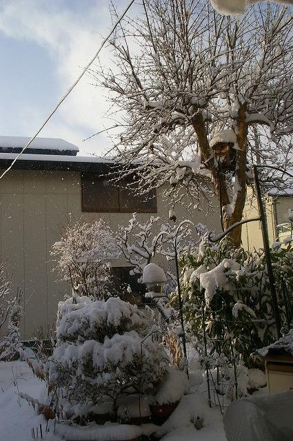 庭の雪景色2