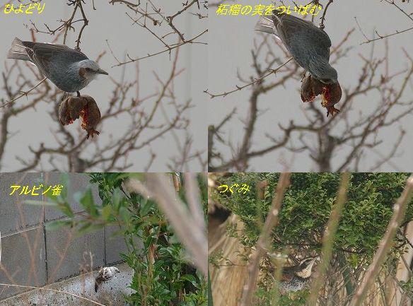 09・01・22鳥たち