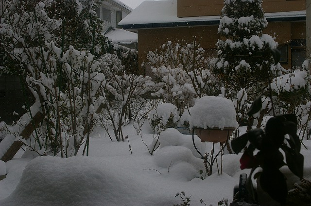 100205庭の雪