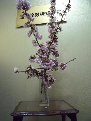 桜_090206_6