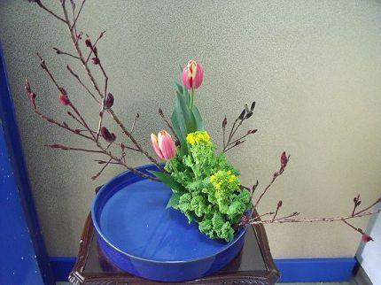 090213チューリップ菜の花ヨコ