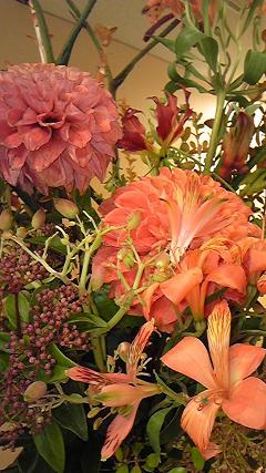 this week's flower Feb24