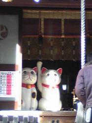 今戸神社ネコ