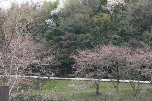 風景-20100331-2