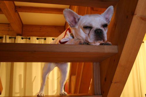 at_home-20091122-2.jpg