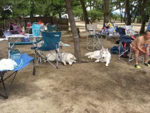2010 7月琵琶湖カヌー 073