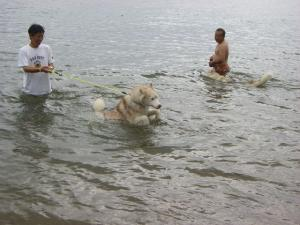 2010 7月琵琶湖カヌー 041