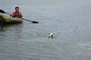 2010 7月琵琶湖カヌー 169