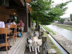 2010 8月高山・乗鞍 433