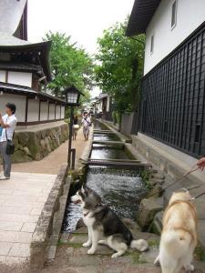 2010 8月高山・乗鞍 060