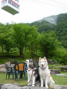 2010 8月高山・乗鞍 519