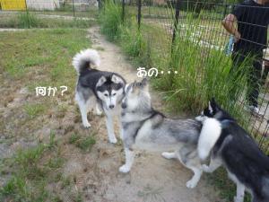 2010 9月愛ハス会 003