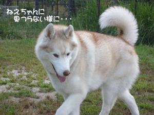 2010 9月愛ハス会 010