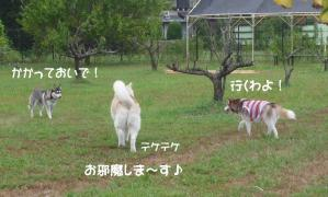 2010 9月愛ハス会 022