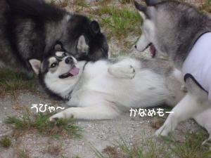 2010 9月愛ハス会 025