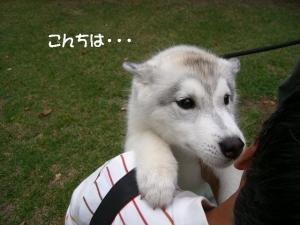 2010 10月清里・蓼科 269