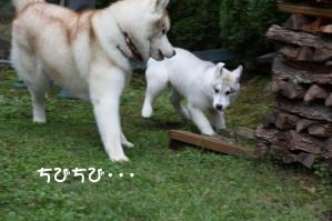 2010 10月清里・蓼科 284