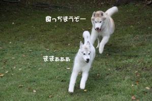 2010 10月清里・蓼科 405