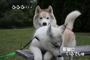 2010 10月清里・蓼科 373