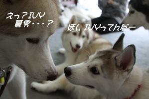 2010 HUS☆HUG 2010 008a