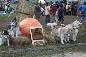 2010 10月カンテ祭 008