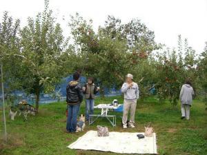 2010 10月りんご狩り 002
