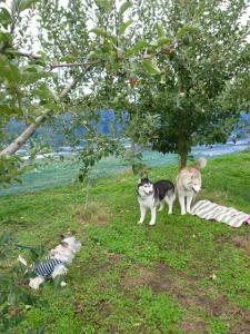 2010 10月りんご狩り 021