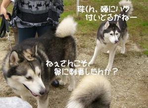 2010 11月愛ハス会 012 a